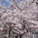 島根県弁護士会総会